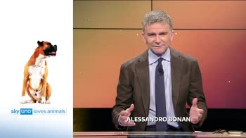 Sky Uno Loves Animals 2: Alessandro Bonan