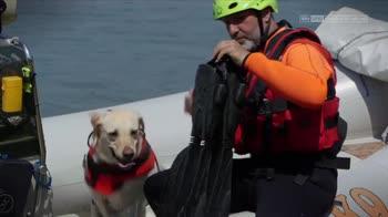 Il TG degli animali: cani da salvataggio
