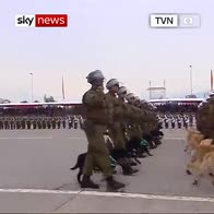 Puppies steal military parade in Chile