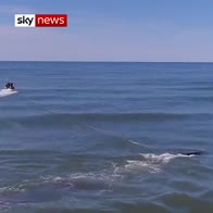 Stranded whale returned to sea