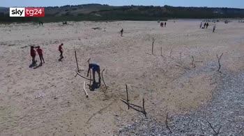 Volontari Marevivo puliscono spiaggia e liberano tartaruga