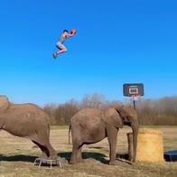 Salta due elefanti e schiaccia: il volo è incredibile