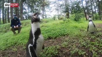 Zoo dell'Oregon, escursione di pinguini nel bosco