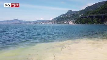 Svizzera, il lago di Ginevra giallo per il polline
