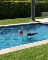 vonn tuffo cane piscina