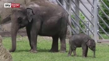 Baby elefanti allo zoo di Praga