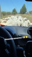 nainggolan capre assembramento