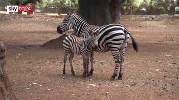 Fasano, riapre lo zoosafari più grande d'Italia