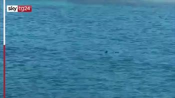 Croazia, apparente avvistamento di squalo a Dubrovnik
