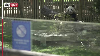 Madrid, dopo 3 mesi riapre lo zoo