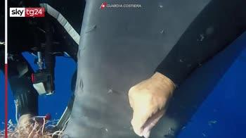 Salina, Balena liberata dalla guardia costiera