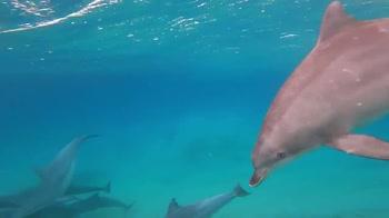Incontro ravvicinato di un surfista con alcuni delfini