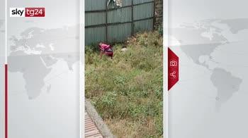 Kenya, uomo cade dal tetto per inseguire babbuino