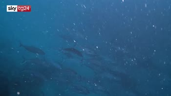 Difendiamo il mare, il tour di Greenpeace nel mar Tirreno