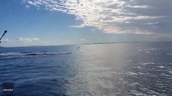 Australia, spettacolari salti in aria di uno squalo