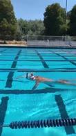 ledecky-nuoto