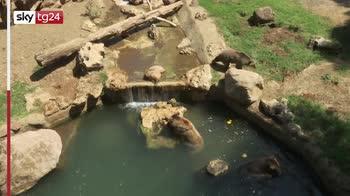 Bioparco di Roma, gli animali si rinfrescano con frutta ghiacciata