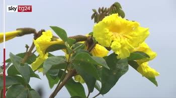 Eartth Day, in Brasile ong pianta alberi autoctoni