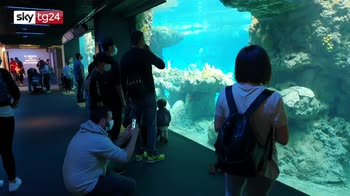 Genova, tornano i visitatori all'acquario