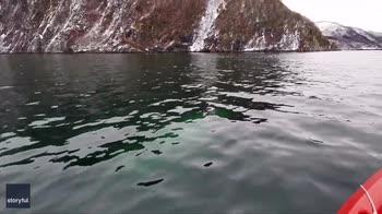 Beluga nuota accanto a kayak tra i fiordi. VIDEO