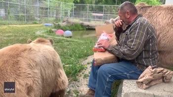 Coppia di orsi in un centro di soccorso apre pacco regalo