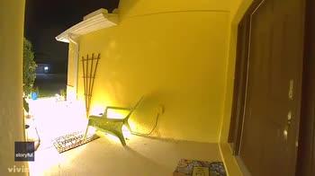 In Florida alligatore si spinge fino al patio di una casa