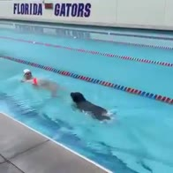 dressel cane piscina