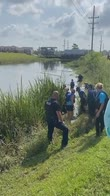 Uragano Ida, salvataggio di un delfino finito in un canale