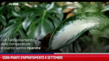 FL Cura piante appartamento a settembre