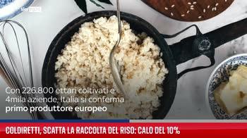 Coldiretti, scatta la raccolta del riso: calo del 10%