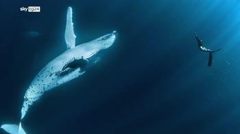 Climate Crisis, riparte da Milano l'Ocean Film Festival
