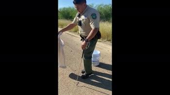 Texas, serpente a sonagli rimesso in libertà VIDEO