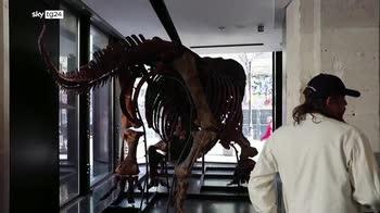 Francia, scheletro di triceratopoall'asta per 1,5 milioni di euro