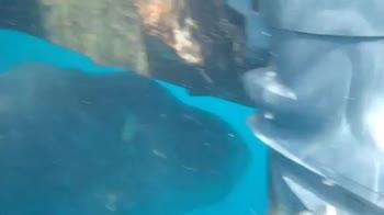 Spagna, pesce luna da 1 tonnellata rilasciato in mare