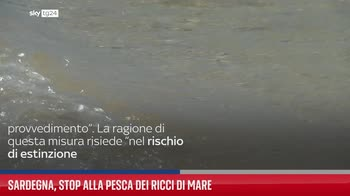 Sardegna, stop alla pesca dei ricci di mare